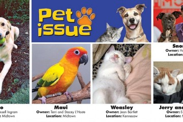 pet issue photos