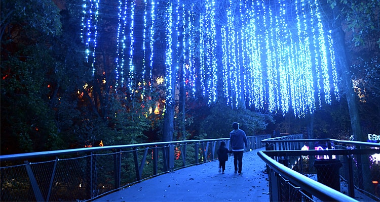 Atlanta Botanical Garden Shines Bright This Year